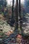 Forêt de Marulaz près d'Epinal (88)