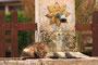Chat sur une fontaine, quelque part dans le Saintois (54)