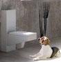 сайт JackRussel-terrier.com Как приучить щенка к туалету