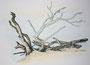 Bäume in den Dünen, 30x40, Bleistift-Aquarell auf Papier