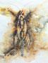 Insekt-Fantasie, 40x30, Aquarell auf Papier