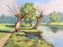 Weiden am Fluss, 30x40, Öl auf Malplatte