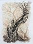 Weide, 30x40, Buntstift auf Aquarell auf Papier