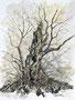 Baumstudie, 40x30, Aquarell auf Papier