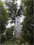Kauri-Baum, ca. 2000 Jahre alt