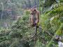 Türen zu im Ella Alpine Resort - Vorsicht vor Affen
