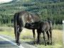 Pferdeland - Im grüneren Westen Montanas
