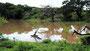 Spiegelung - Wasserloch im Yala-Nationalpark