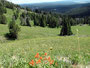 Liebliche Landschaft - Ausblick vom Mount Washburn