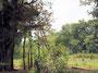 ... der nachts von dieser Baumplattform mit Knallkörpern Elefanten vertreibt