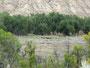 Vor Generationen ausgewildert - Wildpferde im Theodore Roosevelt Nationalpark
