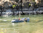 4-Tages-Trip - Rafting durch den Hells Canyon
