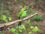 Bunt - Sri Lanka beherberbergt viele Vogelarten