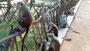Affen in Dambulla haben sich  Buddha ...