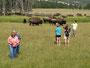Unbelehrbahr - Touristen bei Bison-Porträtaufnahmen