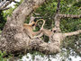 Hanuman Languren bei gegenseitiger Körperpflege
