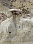 Spiel der Natur 2 - Erosion in den Badlands des Theodore Roosevelt Nationalparks