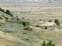 Kein Widerspruch - Bisons, Wildpferde und Ölpumpen im Theodore Roosevelt Nationalpark