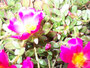 Die Blumen von Elena/Topgliders/Bassano.