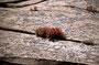 Zion NP: Indian Painbrush auf nacktem Fels