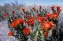 Ein schöner großer Farbtupfer: Echinaceen