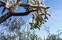 Organ Pipe National Park: Den Chollas sollte man nicht zu nahe kommen - die springen einen an!
