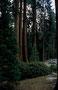 Aber dann im Giant Sequoia NM ist's wieder schön
