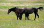 Pferdeland Montana