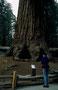 Der Sequoia NP ist berauschend