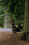 Dann haben wir die Redwoods erreicht