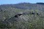 Mount St. Helens: Kilometerweite Verwüstung