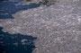 Mount St. Helens: Spirit Lake mit Milionen von hineingespülten Baumstämmen