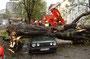 TH, Baum auf Auto