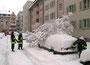 Wegen sowas wird die Feuerwehr alarmiert: Bäumchen auf Auto