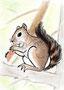 #031 Eichhörnchen