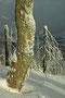 Vom Lusen, Nationalpark Bayerischer Wald