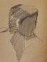 Visage au crayon, env. 1955 (dessin, 16 x 12 cm, coll. part. MR)