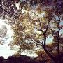 この時期紅葉がとても素敵で、私はやっぱり綺麗な景色を見ながら走るのが好きです!