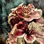 Vieille fleur