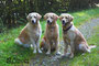 Drei Generationen: Mia, Blue und Dina