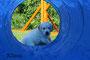 Blauer Hund - Frau Lila
