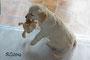 Frau Lila hat einen Löwen erlegt und bringt ihn nun in ihr Versteck