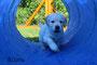 Blauer Hund - muuuutig