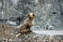27.05.2012 - Foxi nach dem Baden im Steinbruch-See