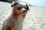 """Foxi am Strand (""""Darf ich endlich wieder ins Wasser?"""")"""