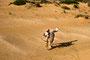 Foxi läuft im Sand
