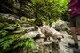 19.05.2012 - Wanderer Foxi - Schnell von Treppen runter