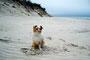22.06.2012 - Am Strand im Naturreservat