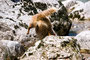 18.05.2012 - Bei Soča - Foxi hat etwas Interessantes gefunden, das muss sie haben...