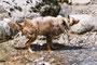18.05.2012 - Schutteln! Kaltes Wasser des Slowenischen Flusses Soča
